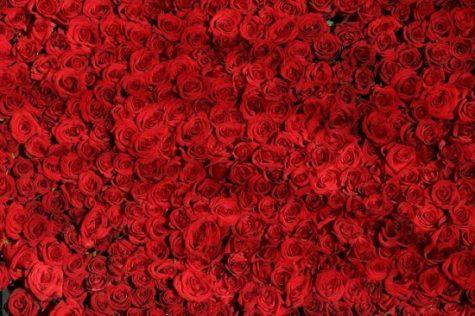 roses valentines